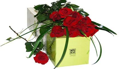 tlc marketing, rosas por san valentin